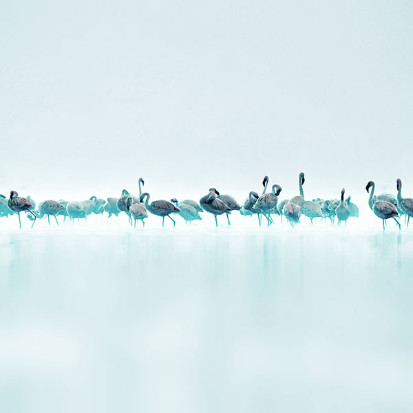 iPapers.co-Apple-iPhone-iPad-Macbook-iMac-wallpaper-me80-flamingos-blue-peace-animal-nature-birds-wallpaper