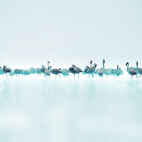 iPapers.co-Apple-iPhone-iPad-Macbook-iMac-wallpaper-me80-flamingos-blue-peace-animal-nature-birds-wallpaper