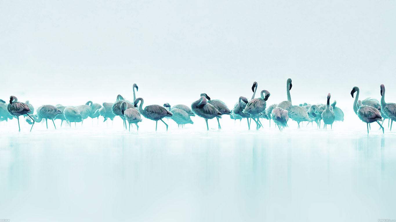 desktop-wallpaper-laptop-mac-macbook-airme80-flamingos-blue-peace-animal-nature-birds-wallpaper