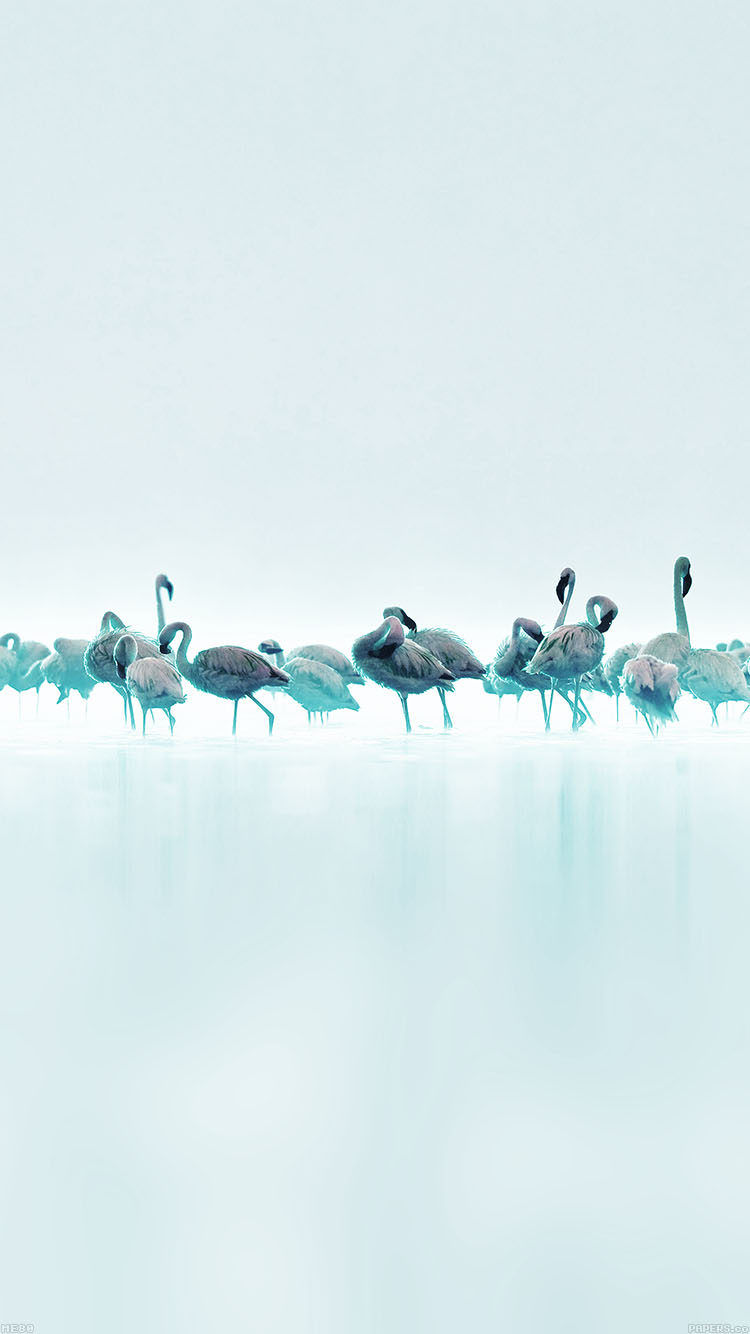 iPhone6papers.co-Apple-iPhone-6-iphone6-plus-wallpaper-me80-flamingos-blue-peace-animal-nature-birds