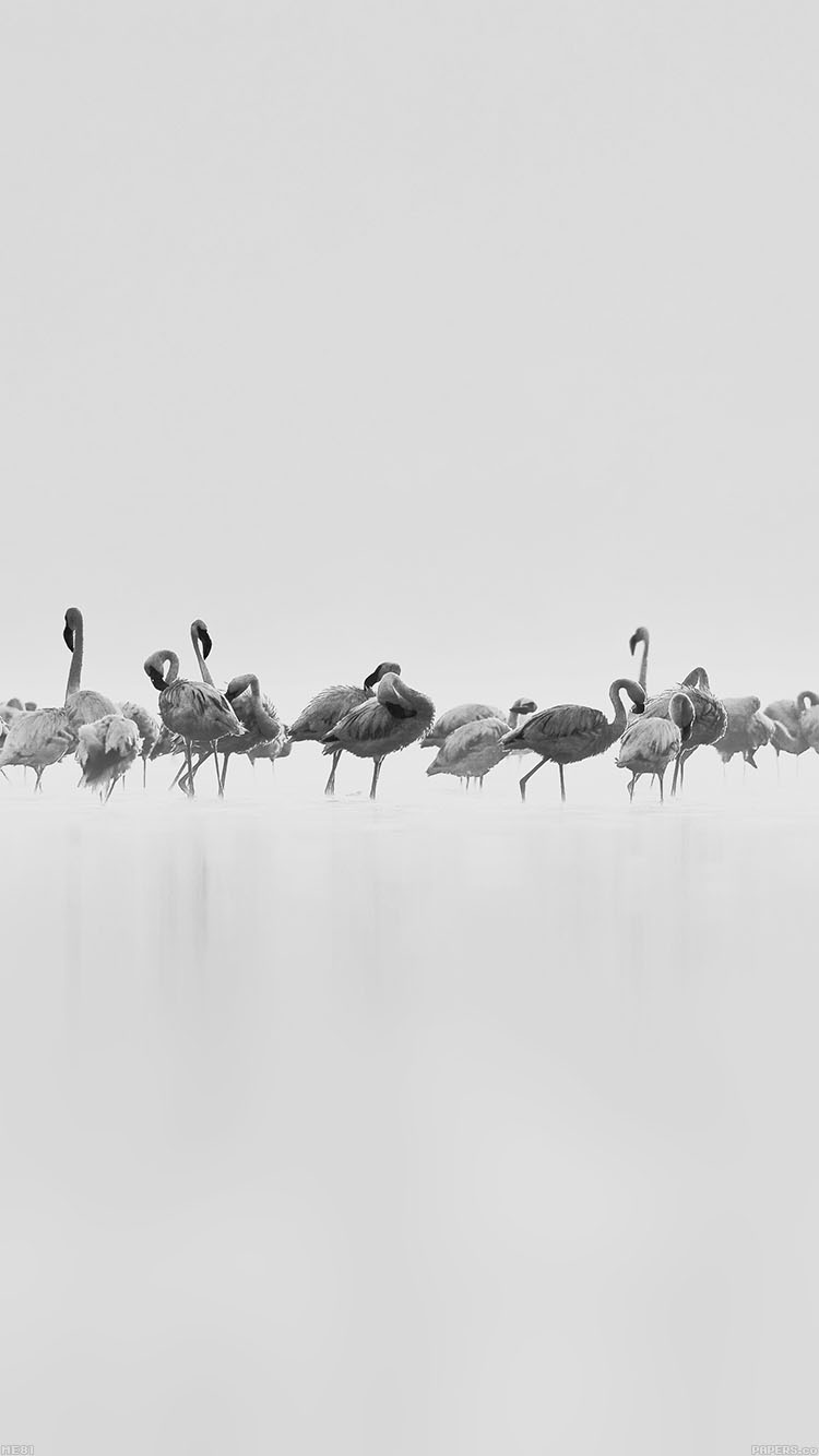 iPhone6papers.co-Apple-iPhone-6-iphone6-plus-wallpaper-me81-flamingos-white-peace-animal-nature-birds