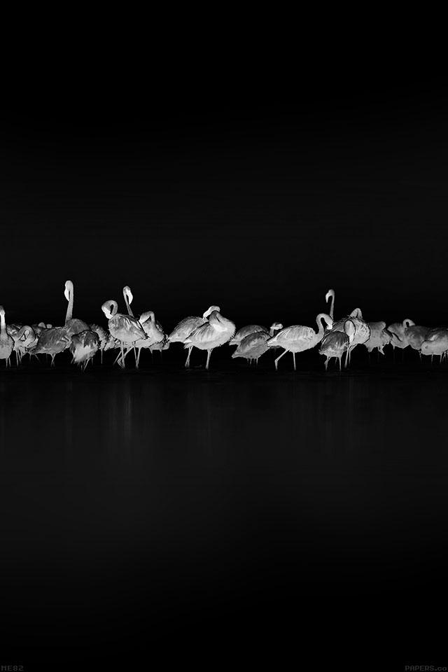 freeios7.com-iphone-4-iphone-5-ios7-wallpaperme82-flamingos-black-peace-animal-nature-birds-iphone4