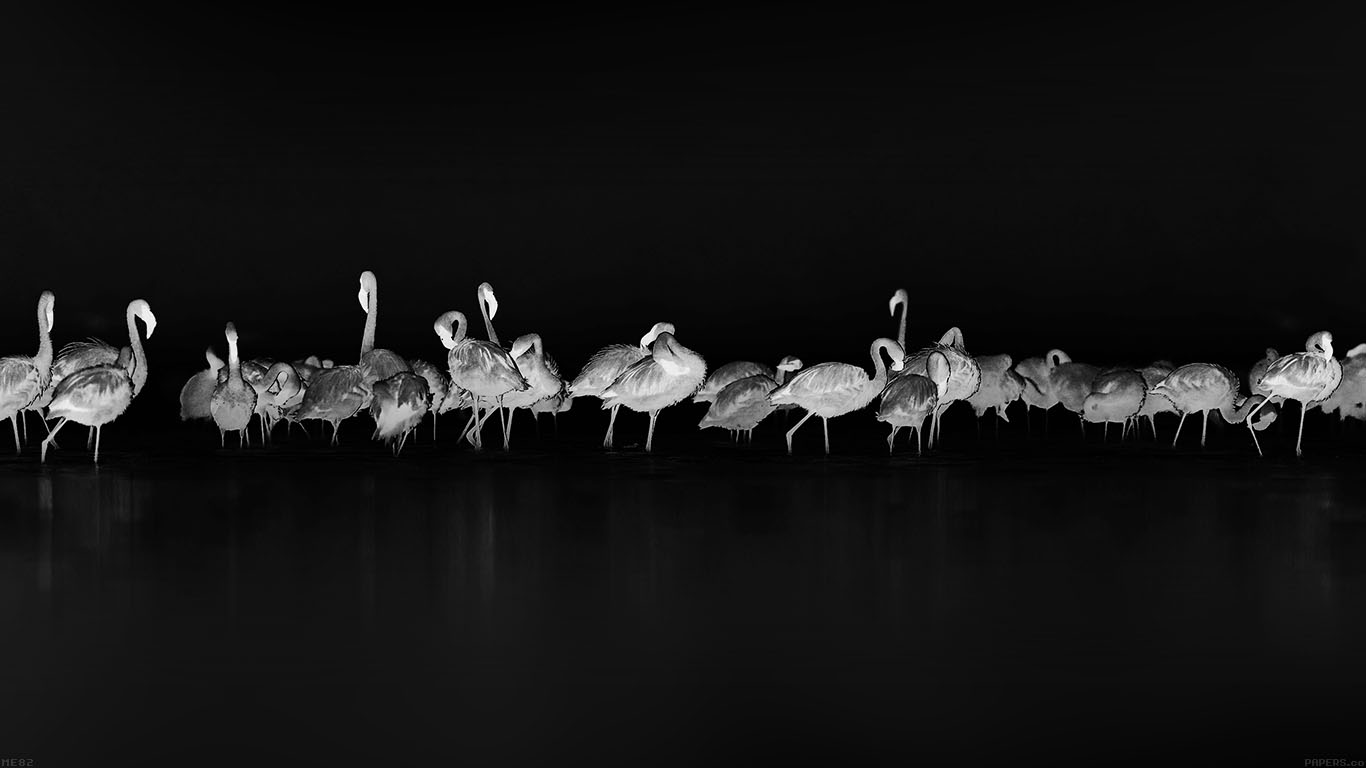iPapers.co-Apple-iPhone-iPad-Macbook-iMac-wallpaper-me82-flamingos-black-peace-animal-nature-birds
