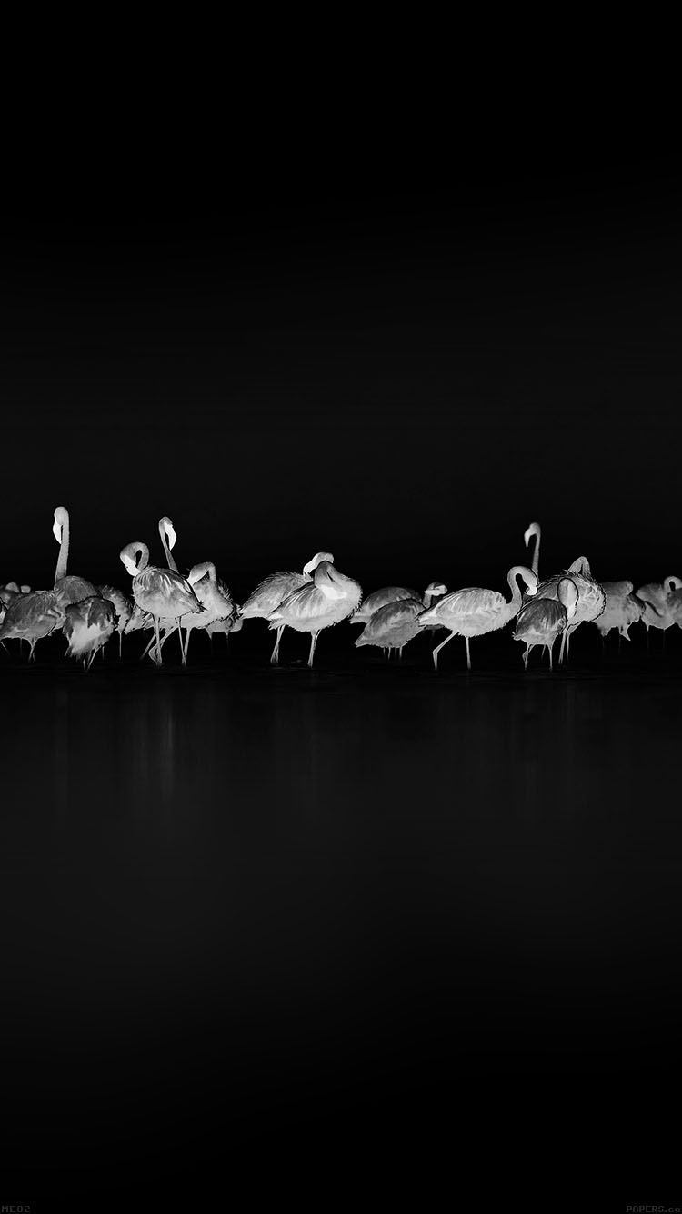 Papers.co-iPhone5-iphone6-plus-wallpaper-me82-flamingos-black-peace-animal-nature-birds