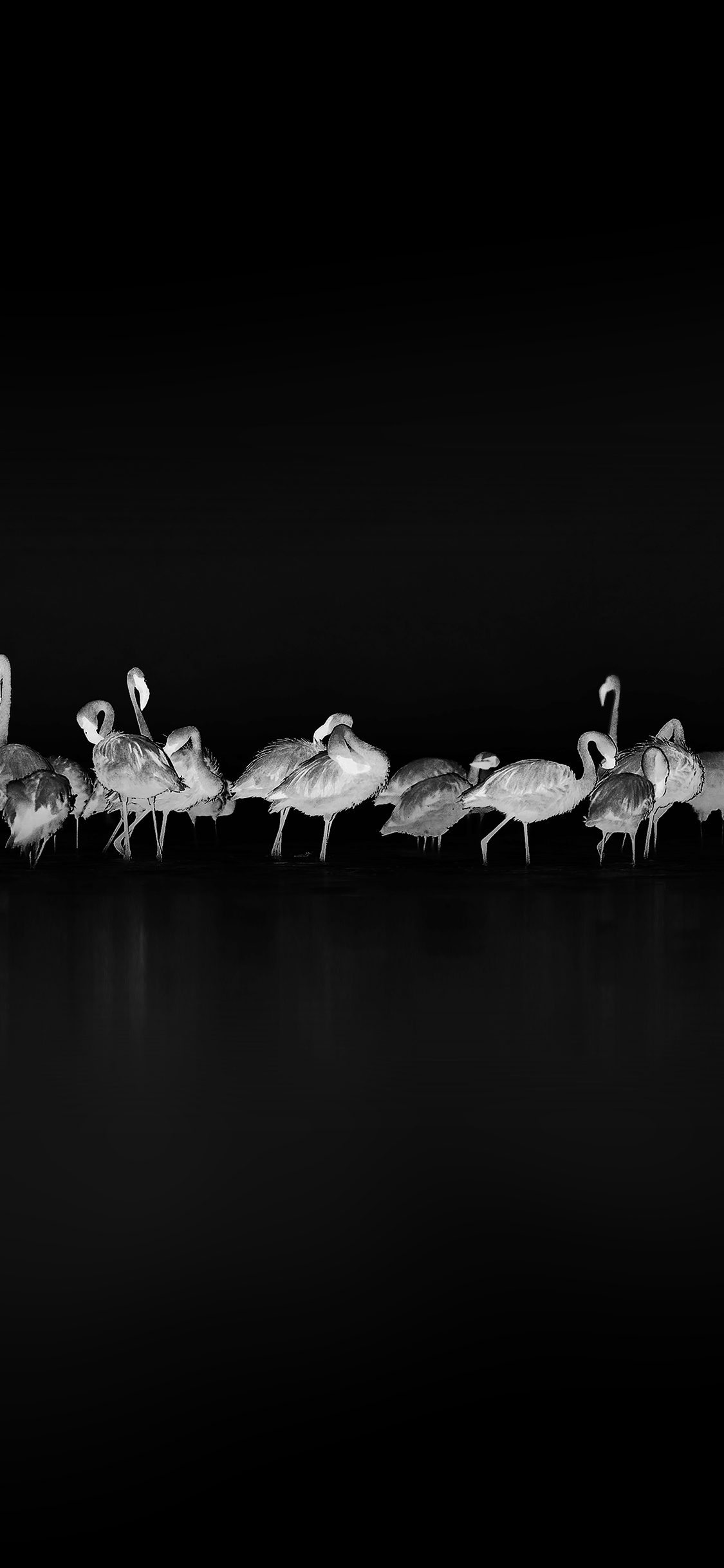 iPhoneXpapers.com-Apple-iPhone-wallpaper-me82-flamingos-black-peace-animal-nature-birds
