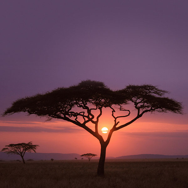 iPapers.co-Apple-iPhone-iPad-Macbook-iMac-wallpaper-mf03-solo-tree-safari-africa-sunset