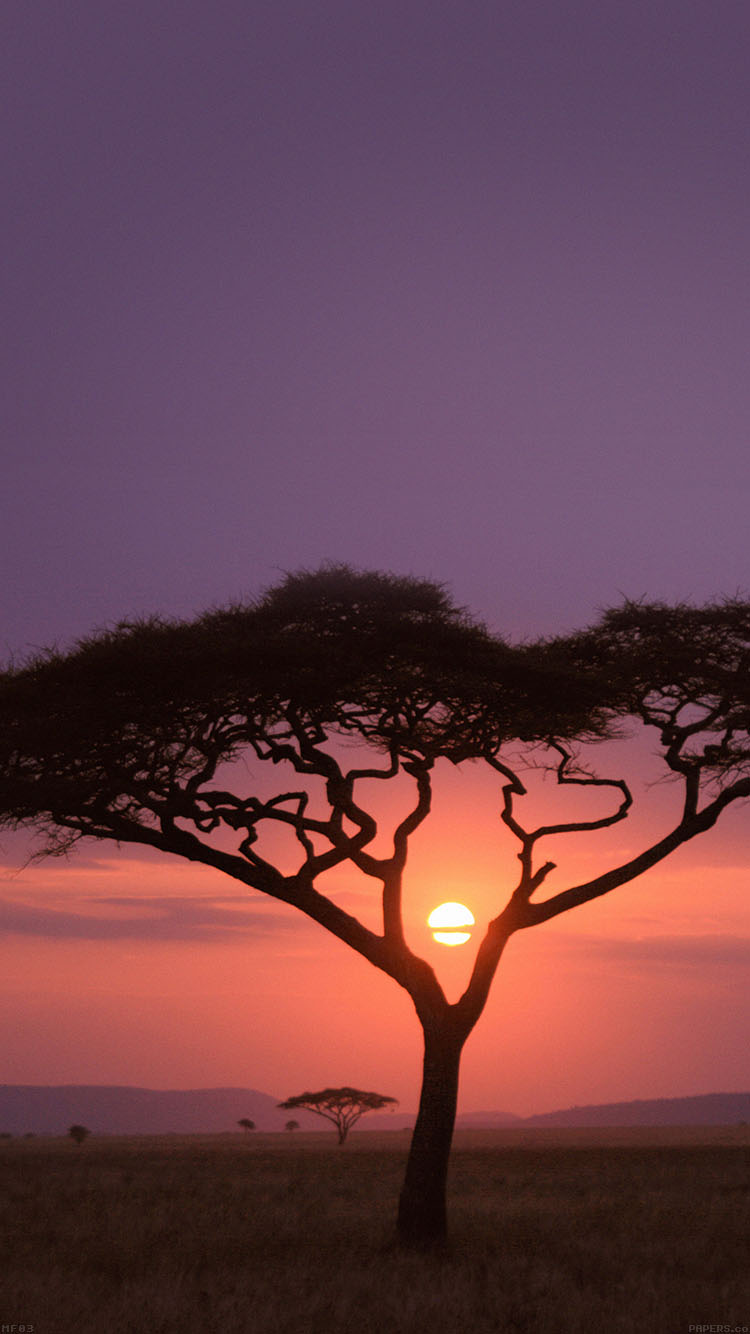 iPhone7papers.com-Apple-iPhone7-iphone7plus-wallpaper-mf03-solo-tree-safari-africa-sunset