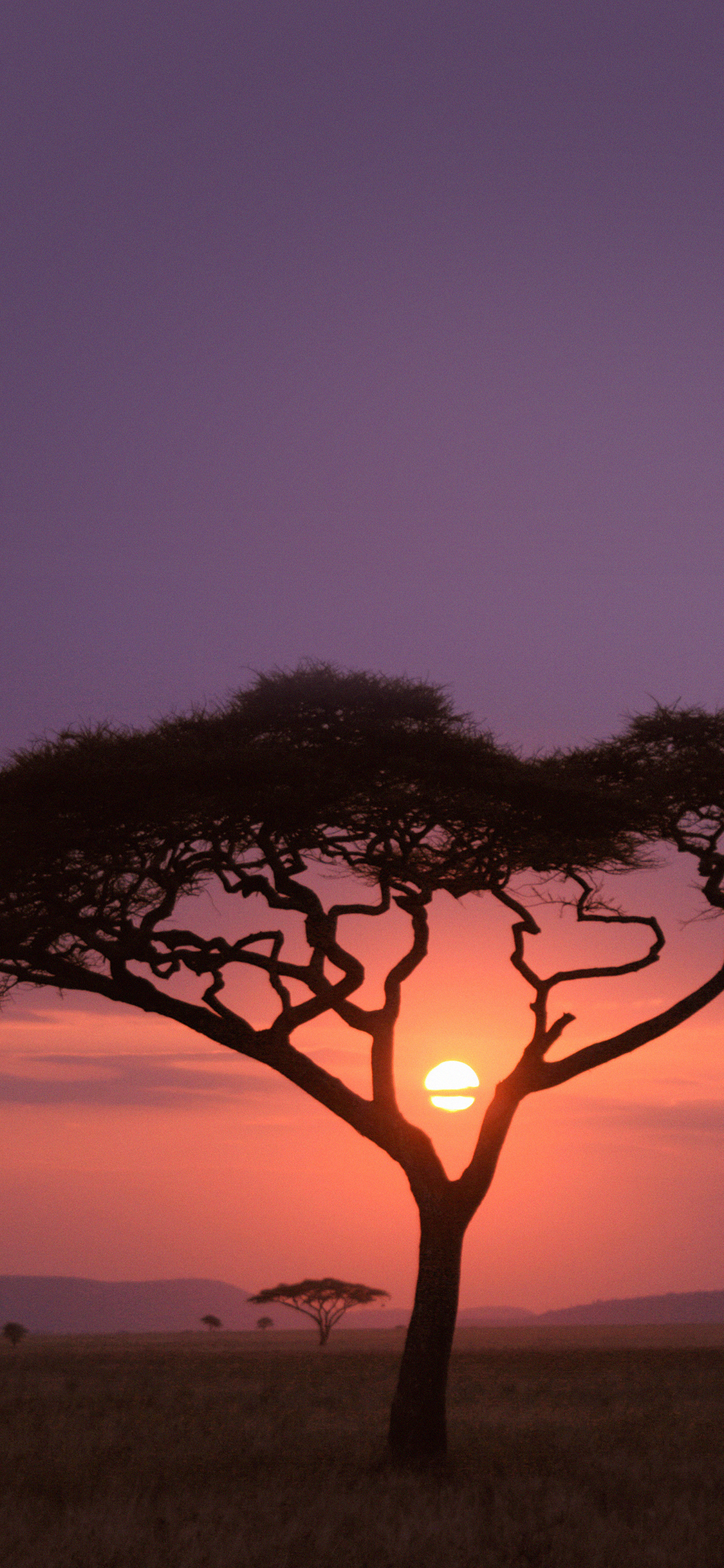 iPhoneXpapers.com-Apple-iPhone-wallpaper-mf03-solo-tree-safari-africa-sunset