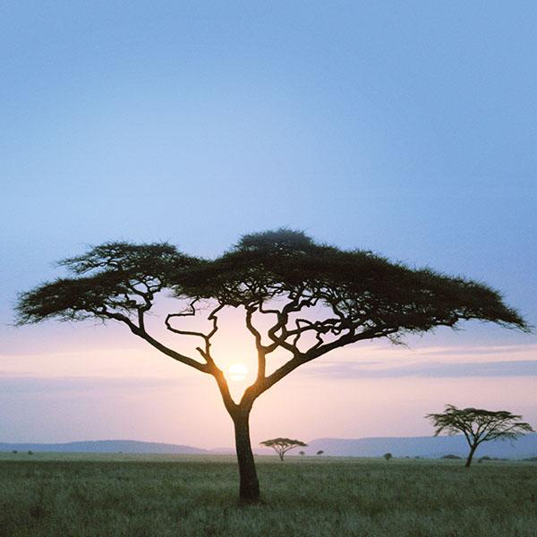 iPapers.co-Apple-iPhone-iPad-Macbook-iMac-wallpaper-mf04-solo-tree-safari-day-africa-sunrise
