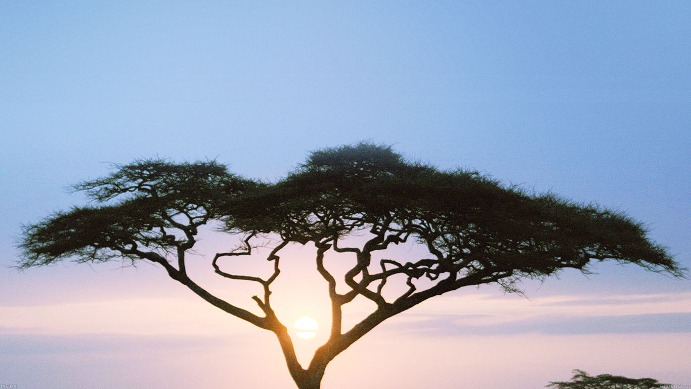 iPapers.co-Apple-iPhone-iPad-Macbook-iMac-wallpaper-mf04-solo-tree-safari-day-africa-sunrise