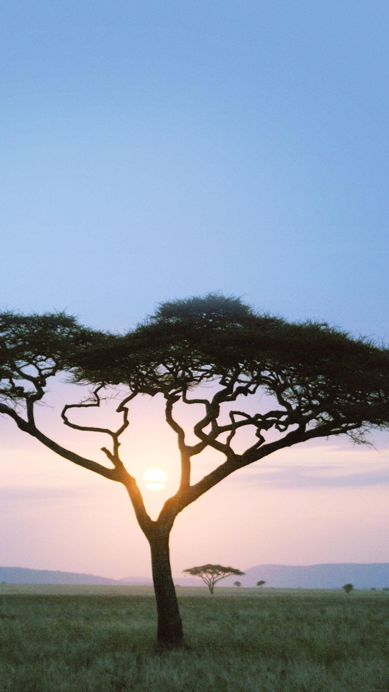mf04-solo-tree-safari-day-africa-sunrise - Papers.co