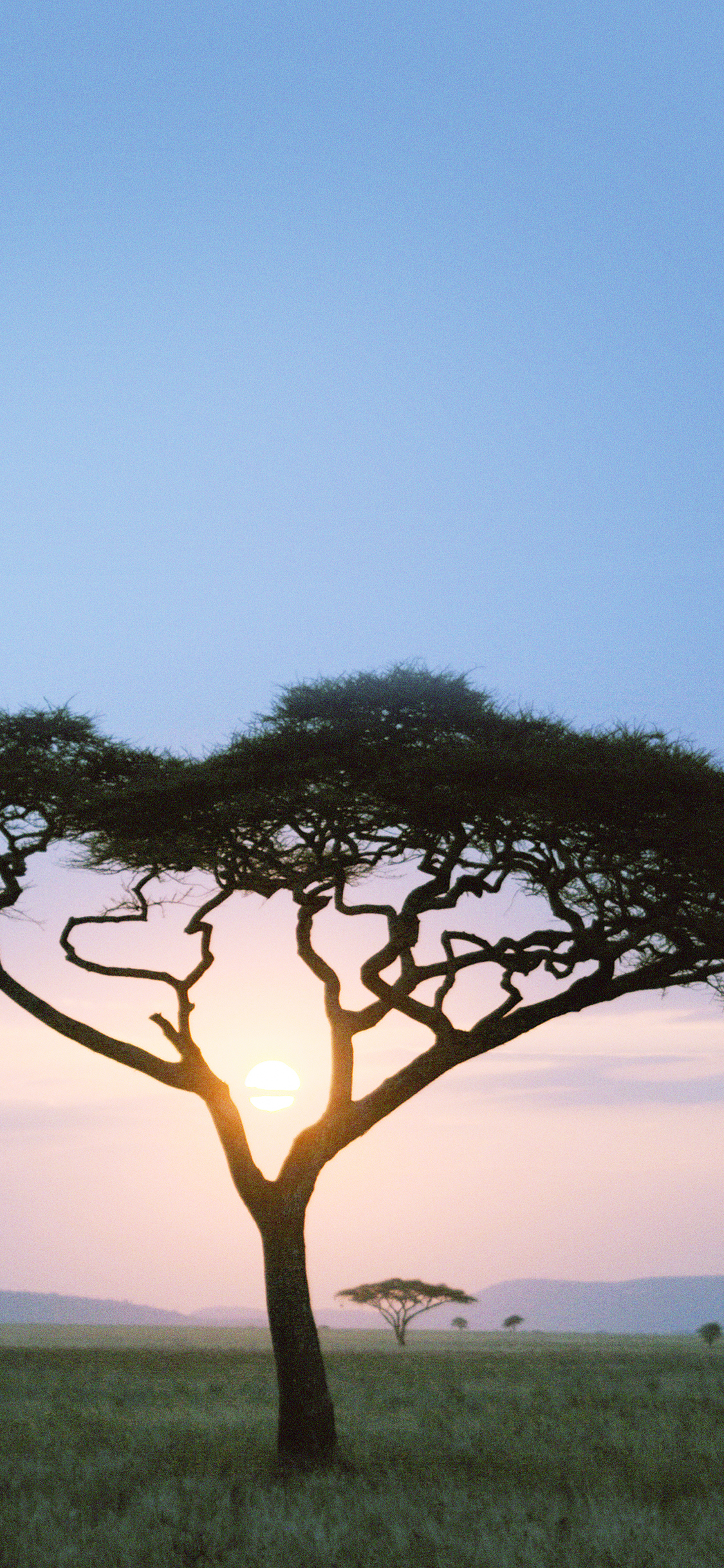 iPhoneXpapers.com-Apple-iPhone-wallpaper-mf04-solo-tree-safari-day-africa-sunrise