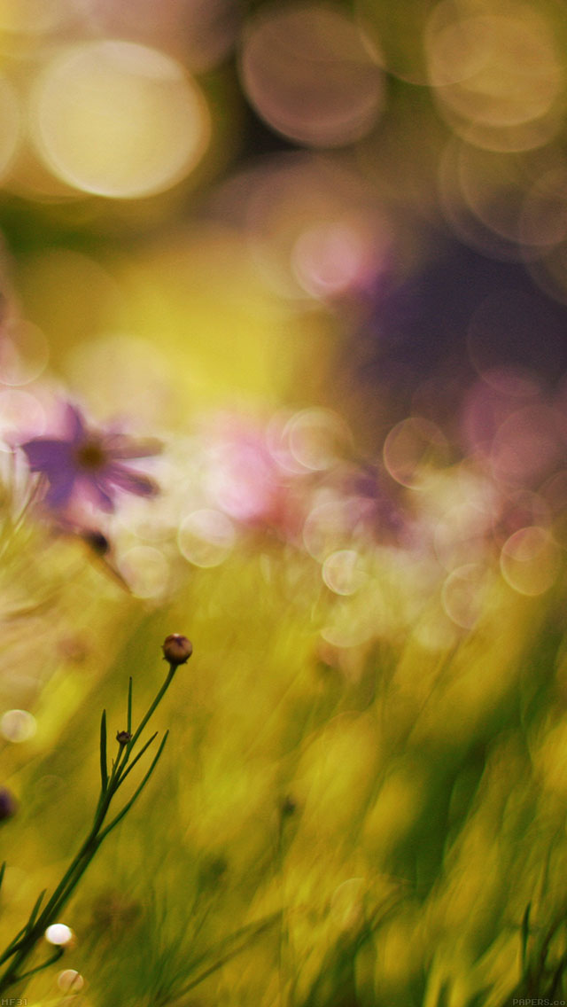 freeios8.com-iphone-4-5-6-ipad-ios8-mf31-flower-bokeh-spring-days-sweet