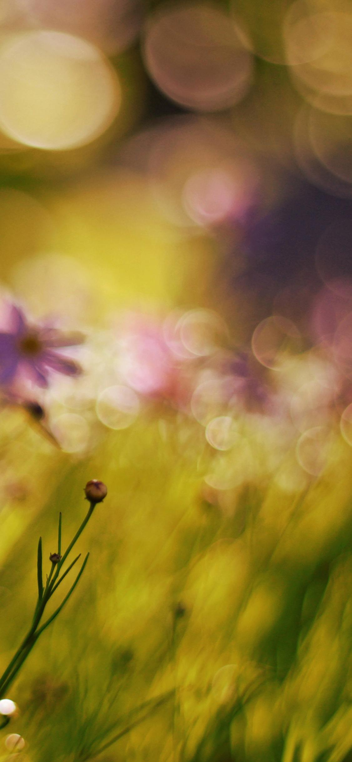 iPhoneXpapers.com-Apple-iPhone-wallpaper-mf31-flower-bokeh-spring-days-sweet