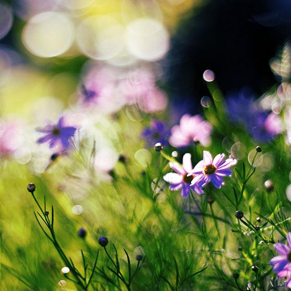 iPapers.co-Apple-iPhone-iPad-Macbook-iMac-wallpaper-mf32-flower-bokeh-spring-days-delicious-wallpaper