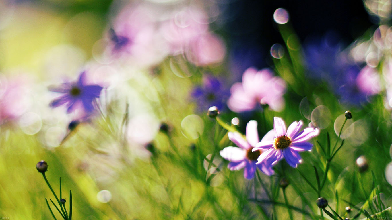 iPapers.co-Apple-iPhone-iPad-Macbook-iMac-wallpaper-mf32-flower-bokeh-spring-days-delicious-wallpaper