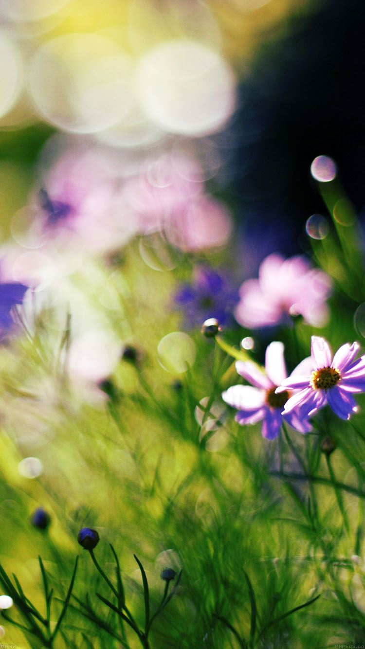 iPhone6papers.co-Apple-iPhone-6-iphone6-plus-wallpaper-mf32-flower-bokeh-spring-days-delicious