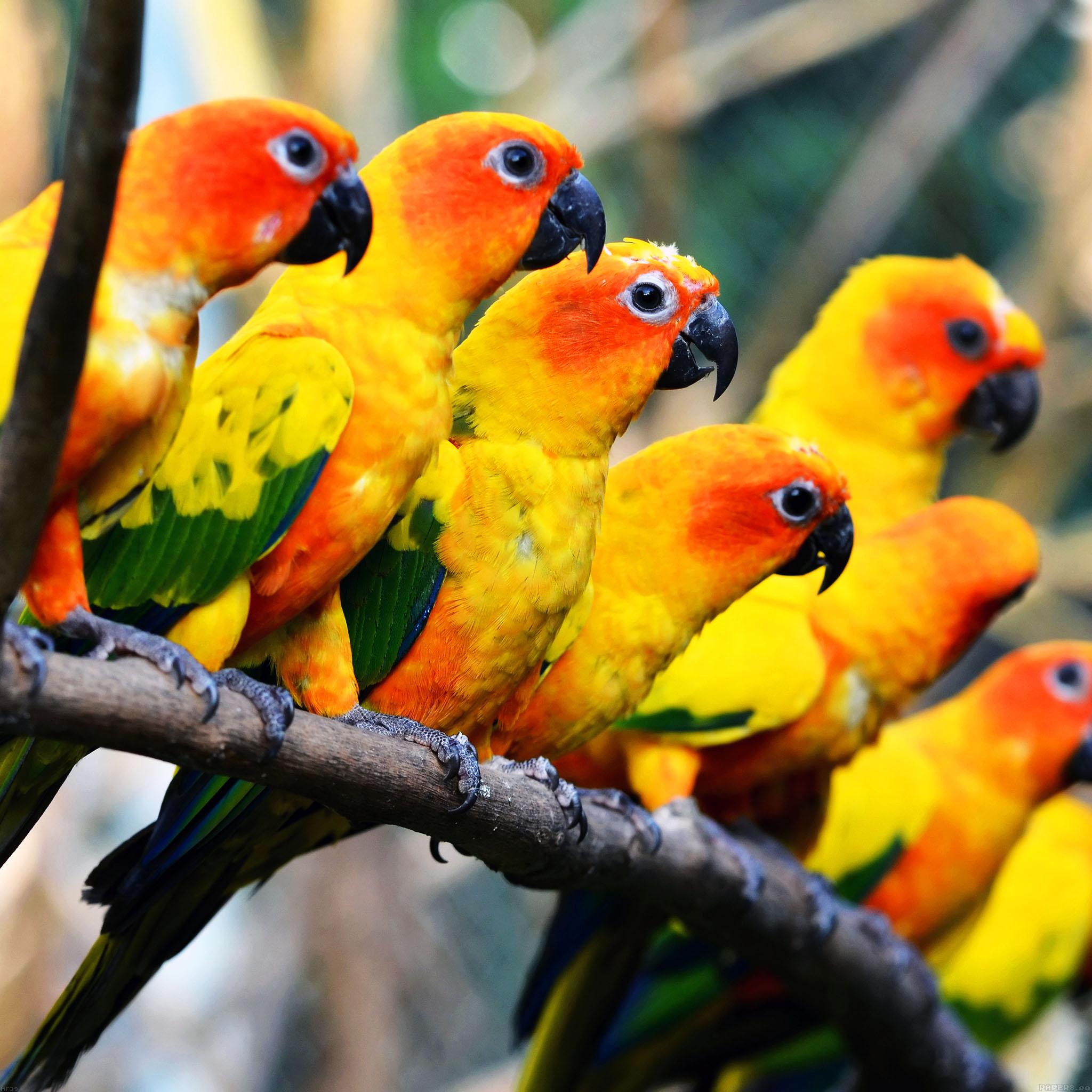 mf39-mocking-bird-family-nature-art