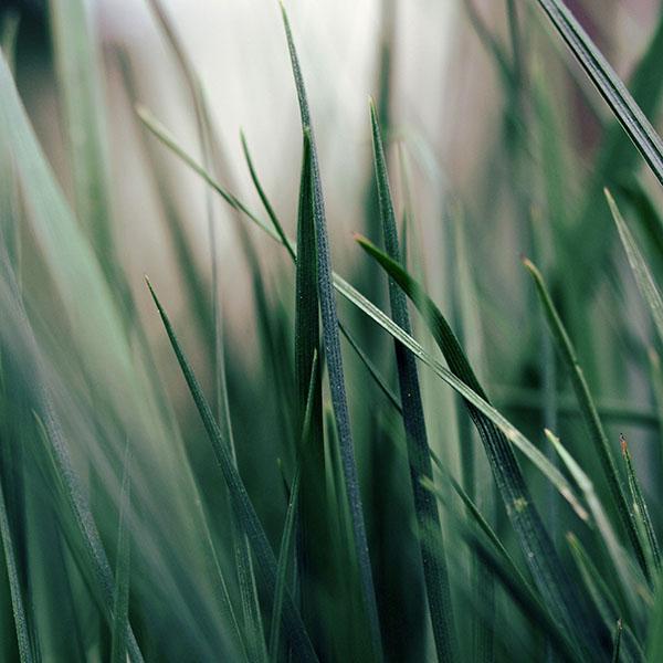 iPapers.co-Apple-iPhone-iPad-Macbook-iMac-wallpaper-mf52-grass-world-garden-leaf-nature