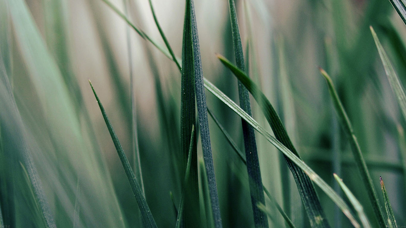 iPapers.co-Apple-iPhone-iPad-Macbook-iMac-wallpaper-mf52-grass-world-garden-leaf-nature-wallpaper