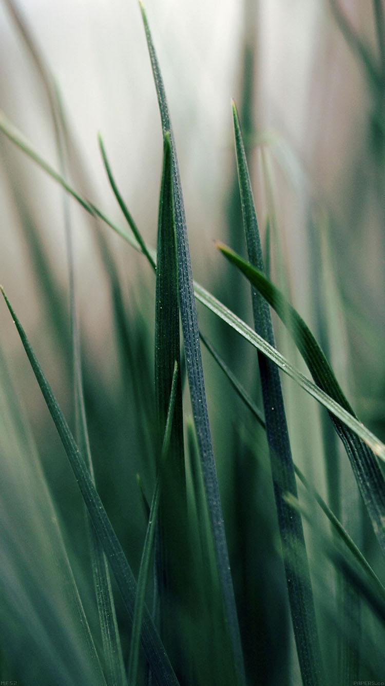 iPhonepapers.com-Apple-iPhone8-wallpaper-mf52-grass-world-garden-leaf-nature