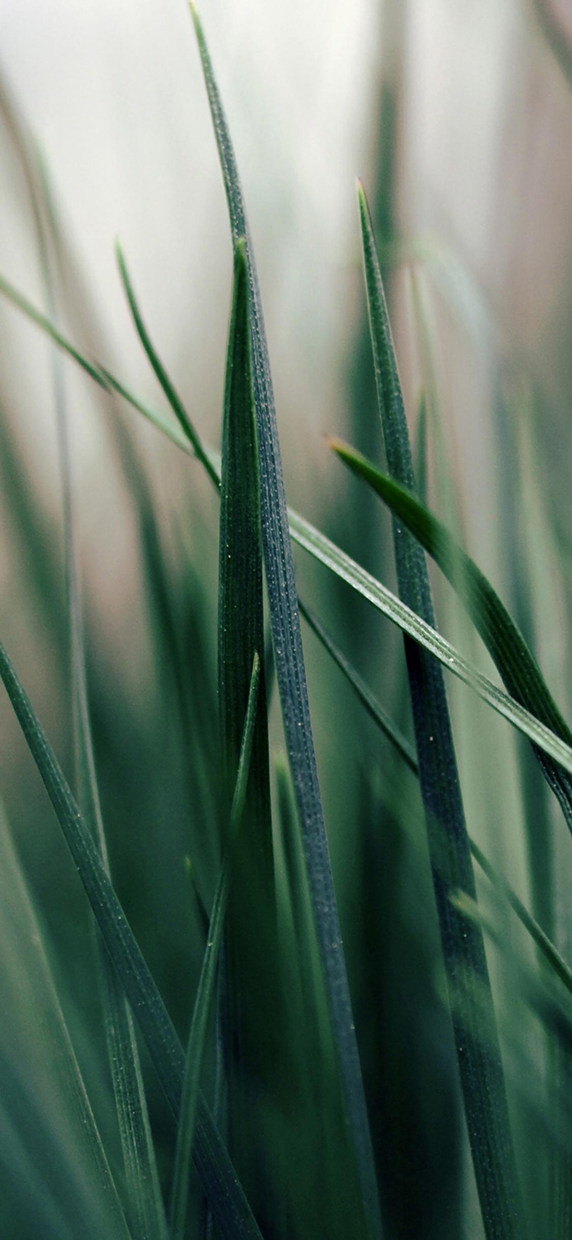 iPhoneXpapers.com-Apple-iPhone-wallpaper-mf52-grass-world-garden-leaf-nature