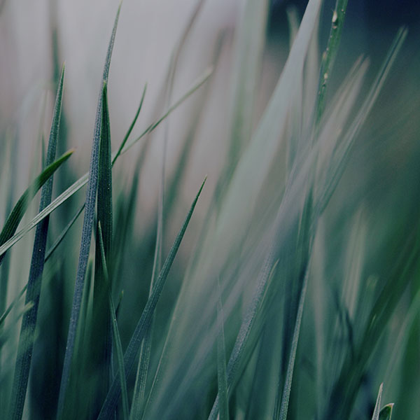 iPapers.co-Apple-iPhone-iPad-Macbook-iMac-wallpaper-mf53-grass-green-world-garden-leaf-nature