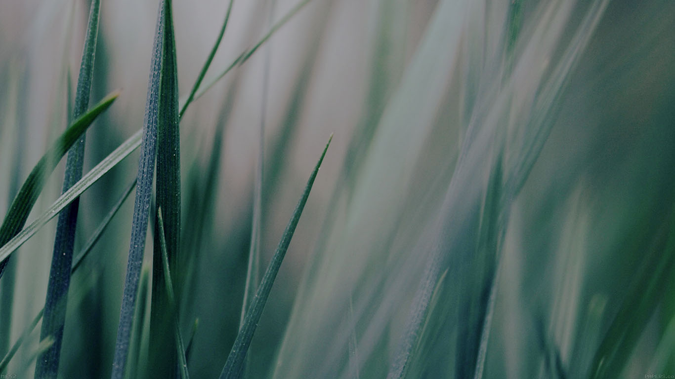 iPapers.co-Apple-iPhone-iPad-Macbook-iMac-wallpaper-mf53-grass-green-world-garden-leaf-nature-wallpaper