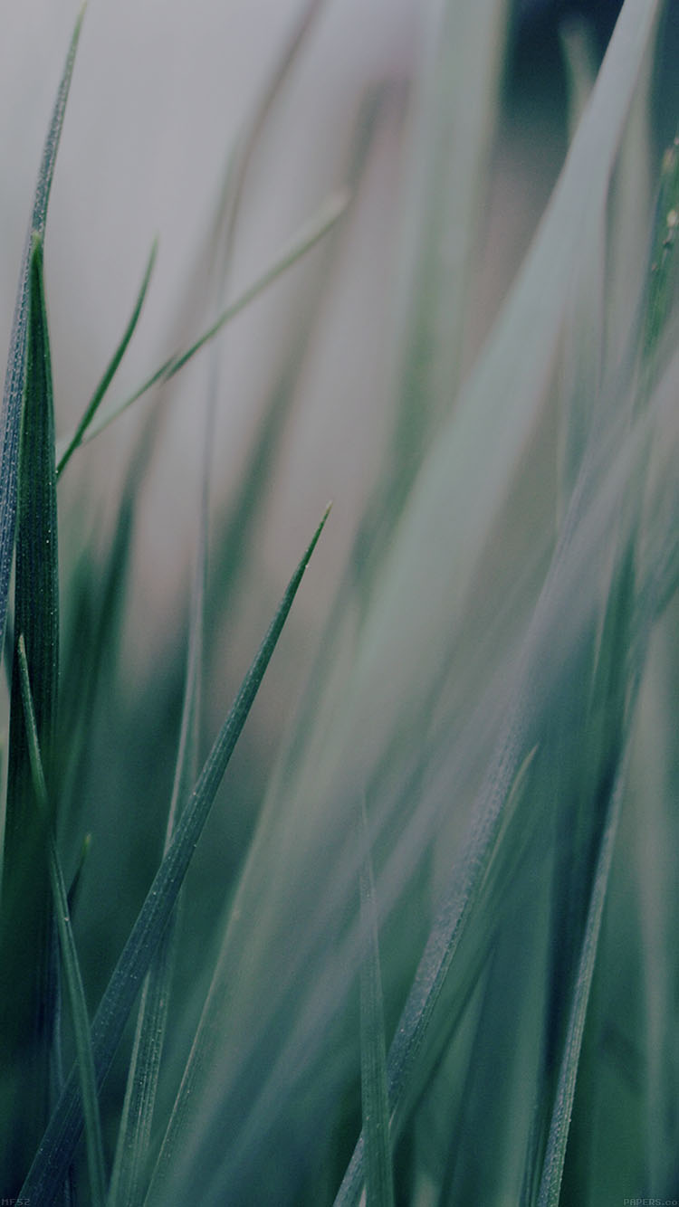 iPhone6papers.co-Apple-iPhone-6-iphone6-plus-wallpaper-mf53-grass-green-world-garden-leaf-nature