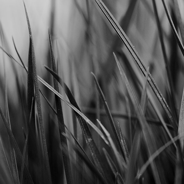 iPapers.co-Apple-iPhone-iPad-Macbook-iMac-wallpaper-mf54-grass-dark-bw-world-garden-leaf-nature-wallpaper