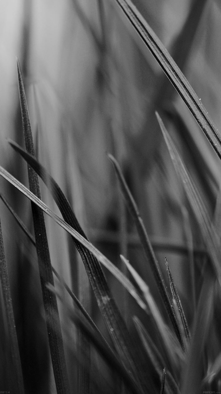 iPhonepapers.com-Apple-iPhone8-wallpaper-mf54-grass-dark-bw-world-garden-leaf-nature