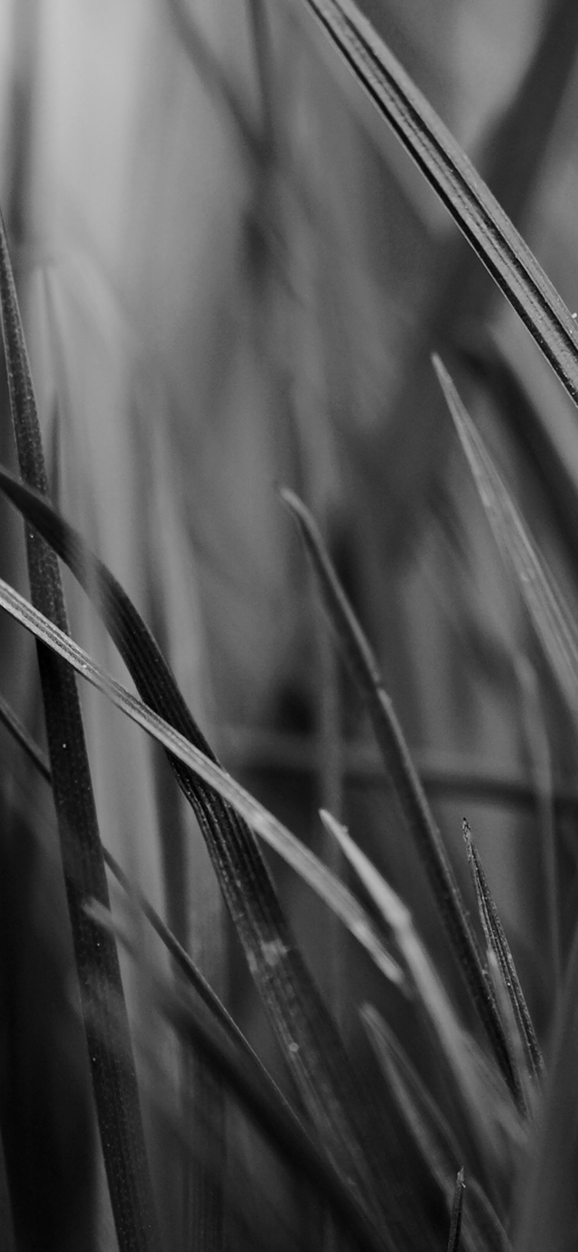 iPhoneXpapers.com-Apple-iPhone-wallpaper-mf54-grass-dark-bw-world-garden-leaf-nature