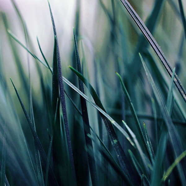 iPapers.co-Apple-iPhone-iPad-Macbook-iMac-wallpaper-mf55-grass-blue-bw-world-garden-leaf-nature-wallpaper