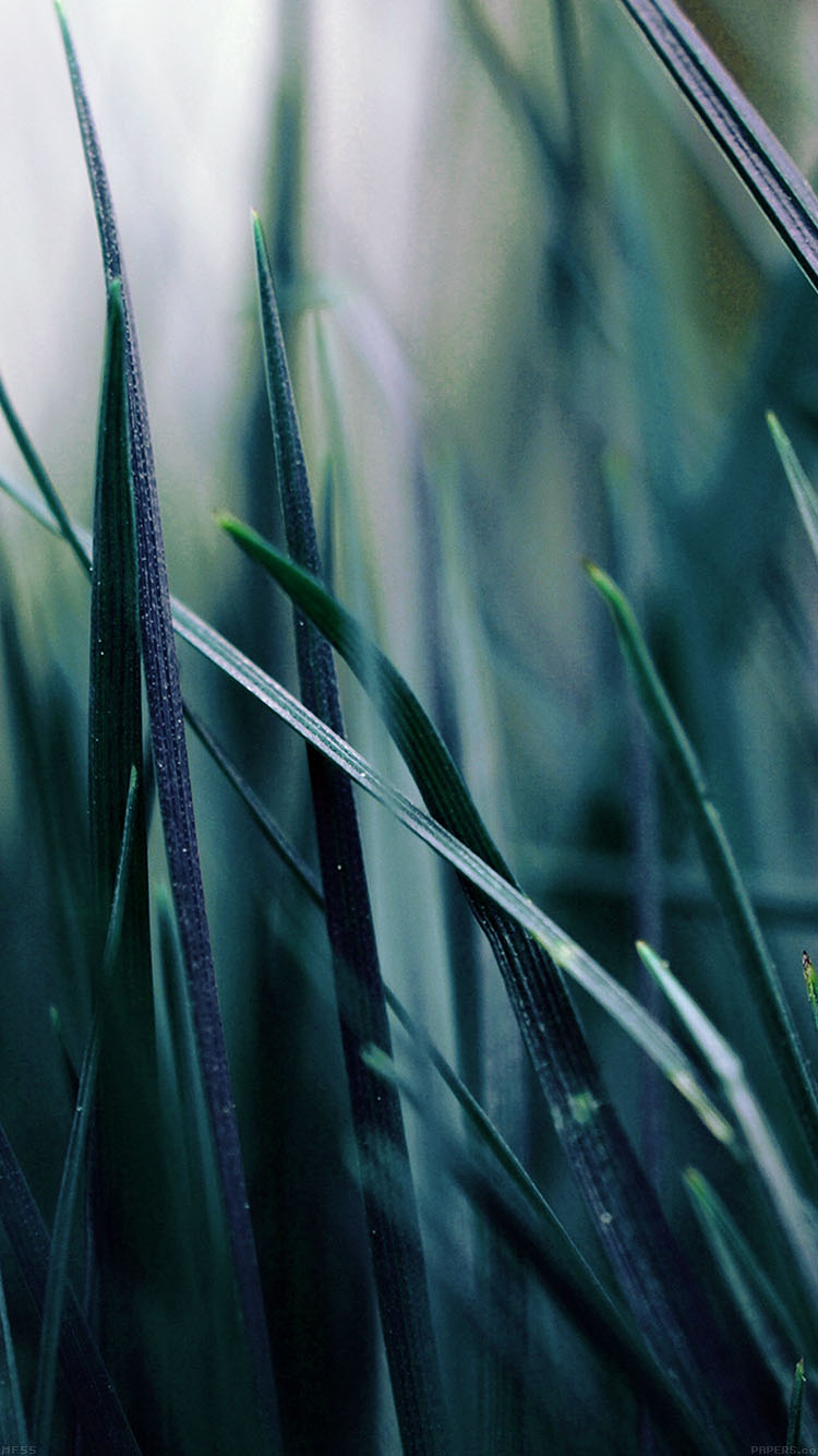 iPhone6papers.co-Apple-iPhone-6-iphone6-plus-wallpaper-mf55-grass-blue-bw-world-garden-leaf-nature