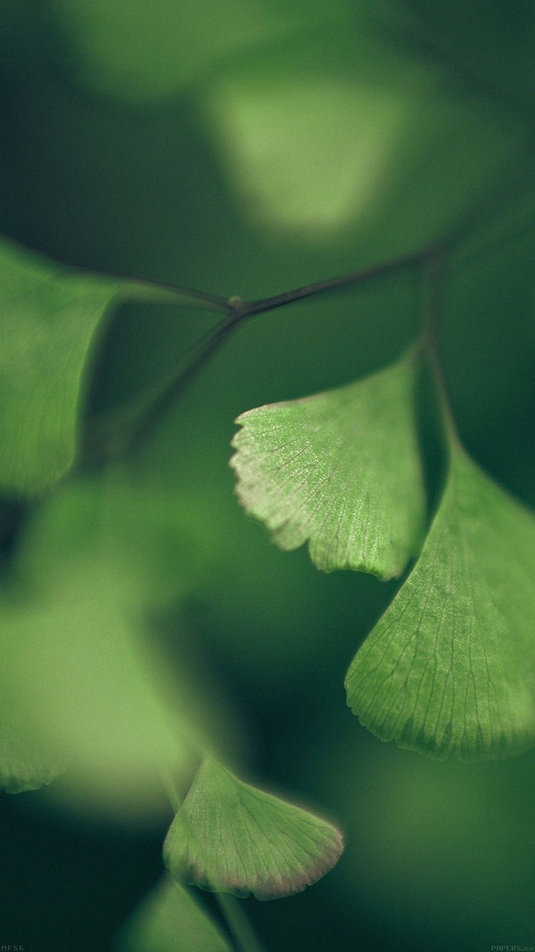 Papers.co-iPhone5-iphone6-plus-wallpaper-mf56-good-luck-clovers-leaf-nature