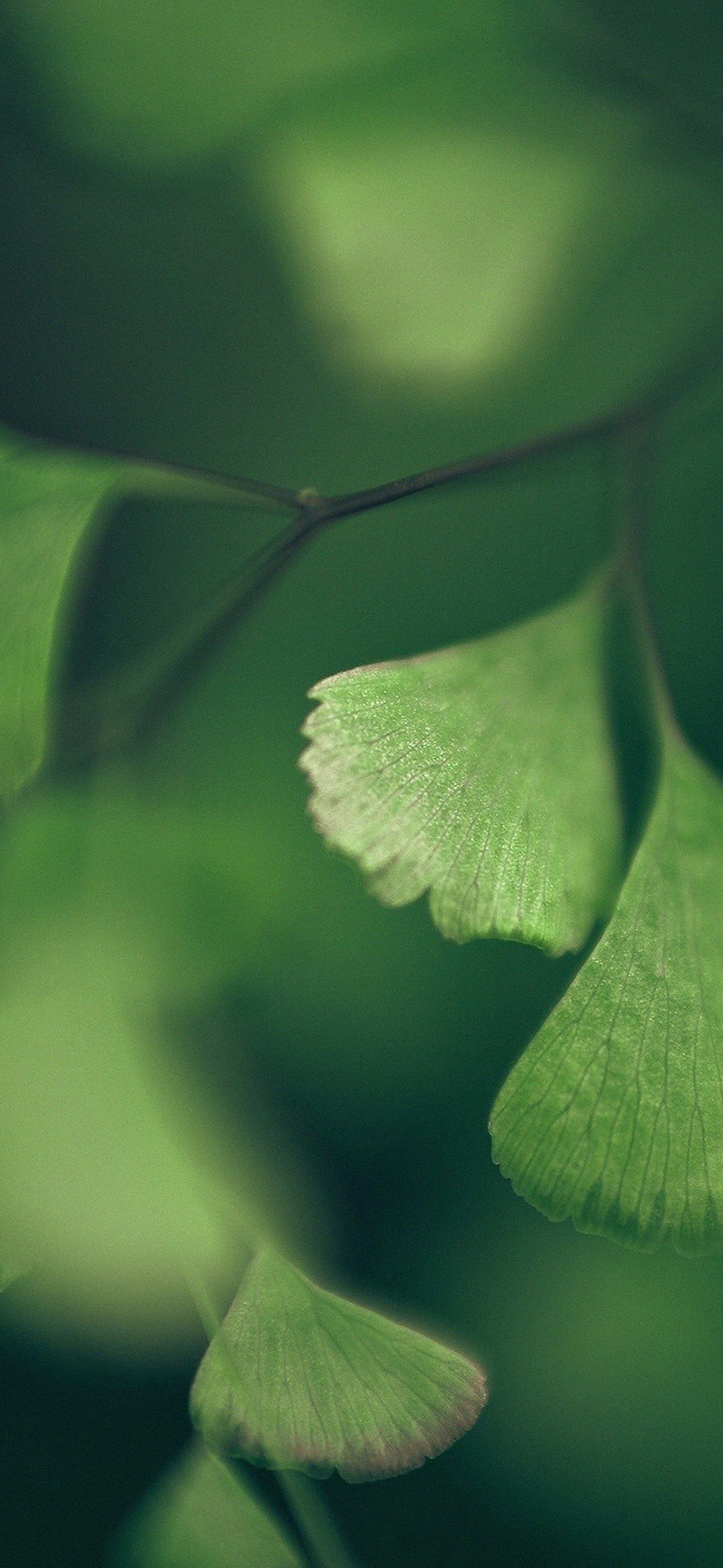 iPhoneXpapers.com-Apple-iPhone-wallpaper-mf56-good-luck-clovers-leaf-nature