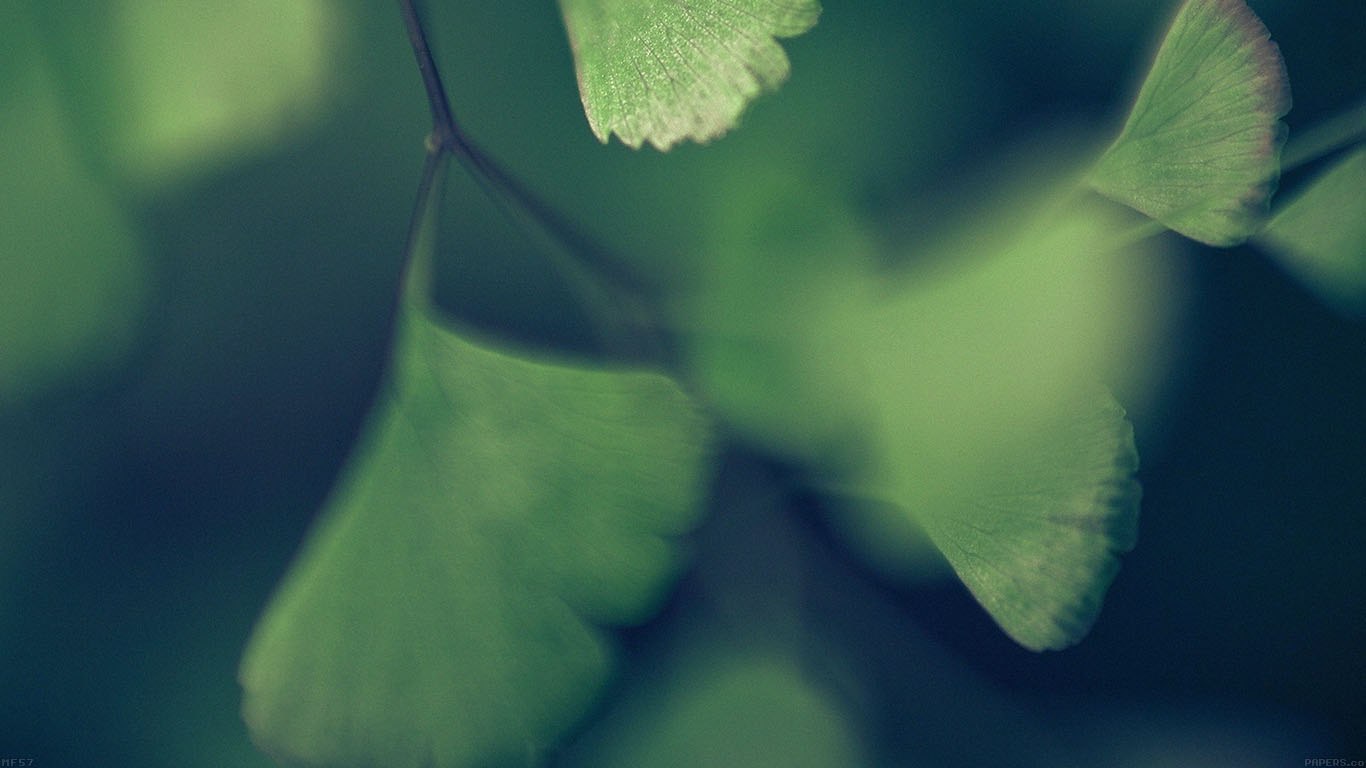 iPapers.co-Apple-iPhone-iPad-Macbook-iMac-wallpaper-mf57-good-luck-blue-clovers-leaf-nature-wallpaper