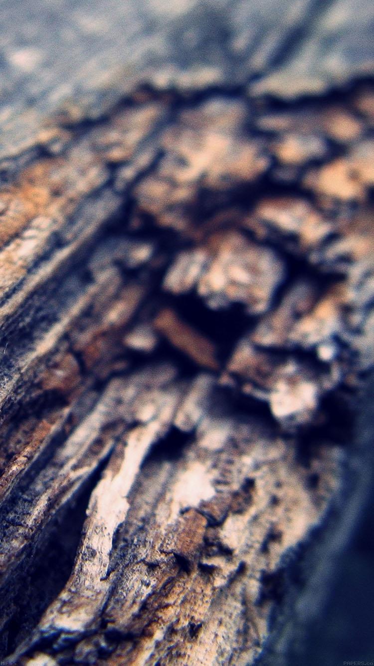 iPhonepapers.com-Apple-iPhone8-wallpaper-mf65-old-tree-nature