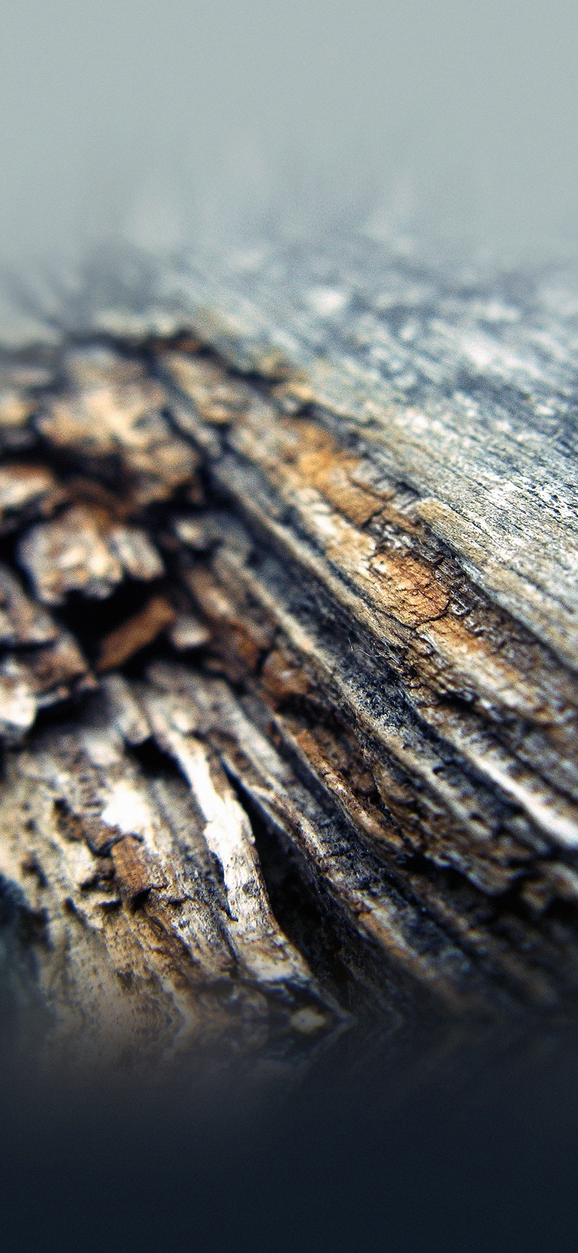iPhoneXpapers.com-Apple-iPhone-wallpaper-mf66-old-aged-tree-nature