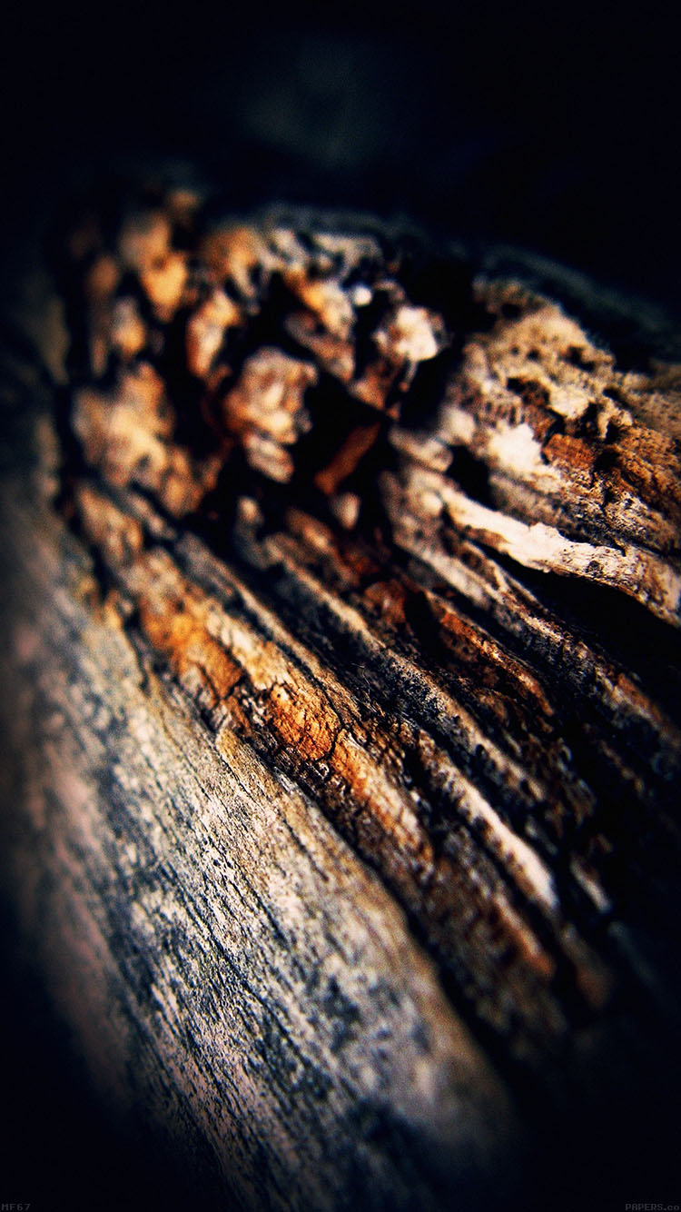 iPhone6papers.co-Apple-iPhone-6-iphone6-plus-wallpaper-mf67-old-aged-tree-vertical-dark-nature