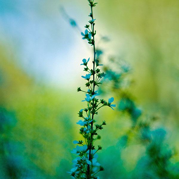 iPapers.co-Apple-iPhone-iPad-Macbook-iMac-wallpaper-mf95-blue-flower-day-bokeh-nature