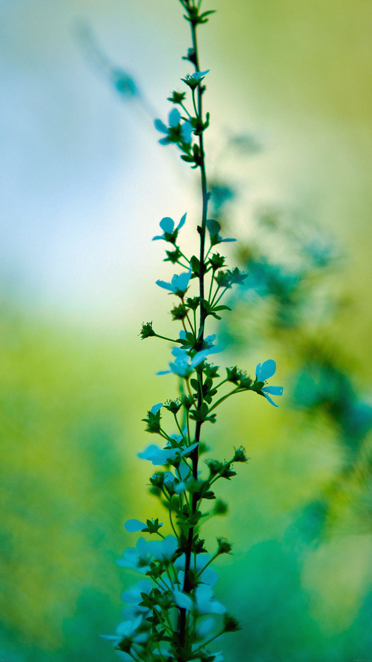 Mf95 Blue Flower Day Bokeh Nature Papers Co