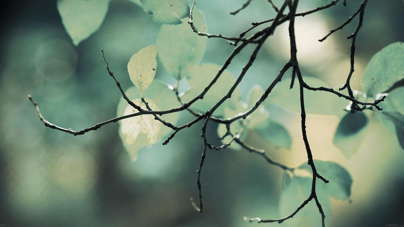 iPapers.co-Apple-iPhone-iPad-Macbook-iMac-wallpaper-mg27-leaf-green-tree-sleeping-wood-nature-wallpaper