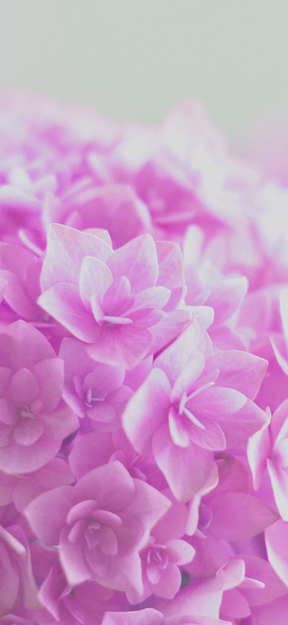 iPhoneXpapers.com-Apple-iPhone-wallpaper-mg39-red-hortensia-flower-beautiful-nature