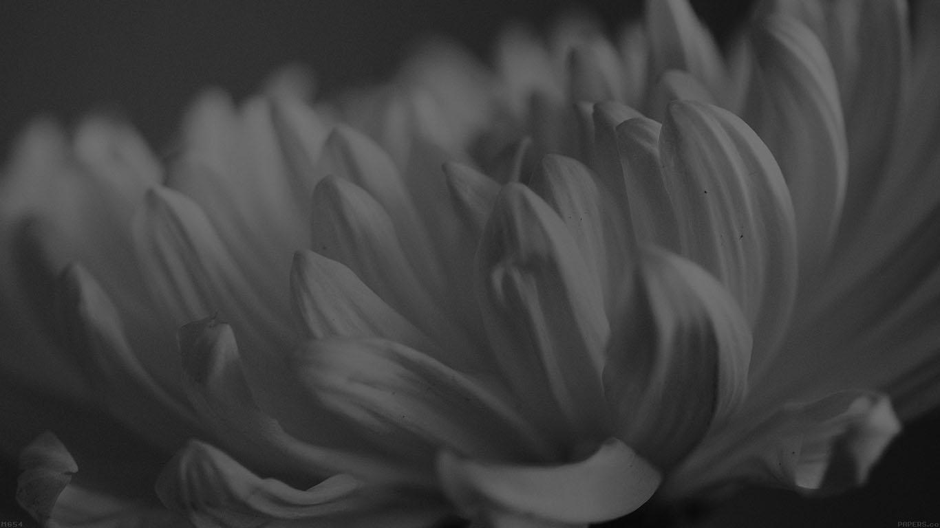 desktop-wallpaper-laptop-mac-macbook-air-mg54-silk-flower-dark-mutant-nature-wallpaper