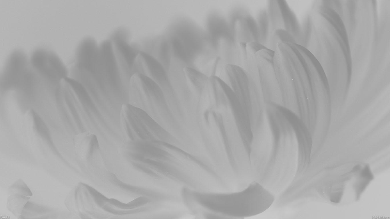 iPapers.co-Apple-iPhone-iPad-Macbook-iMac-wallpaper-mg55-silk-flower-white-mutant-nature-wallpaper
