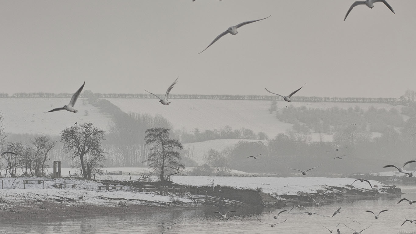 iPapers.co-Apple-iPhone-iPad-Macbook-iMac-wallpaper-mg66-fly-birds-snowy-river-winter-lake-nature-wallpaper