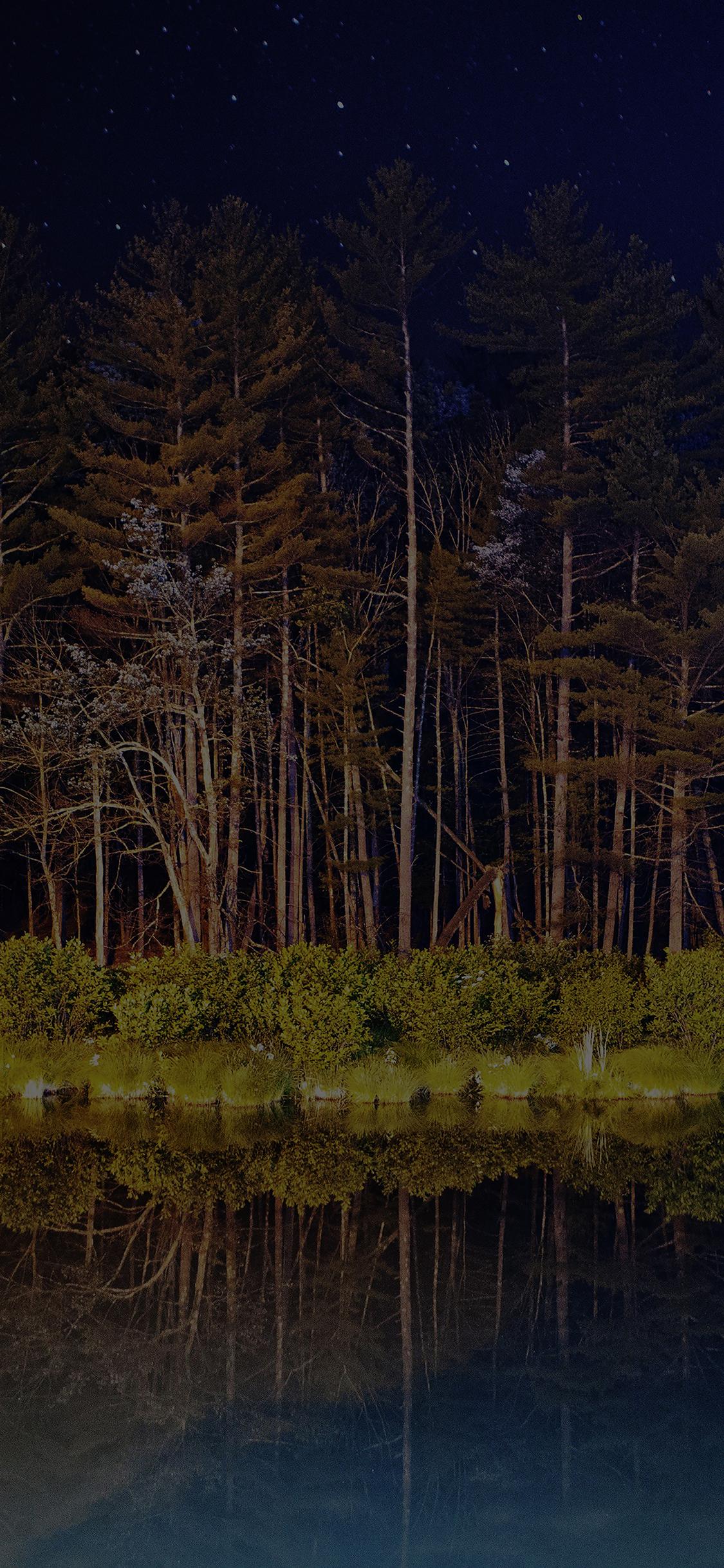 Mg68 Night Dark Wood With Lake Nature