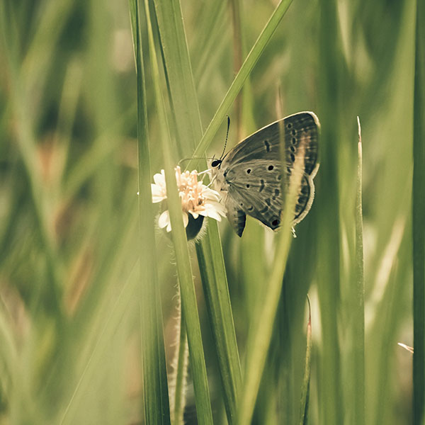 iPapers.co-Apple-iPhone-iPad-Macbook-iMac-wallpaper-mg72-butterfly-eating-time-nature