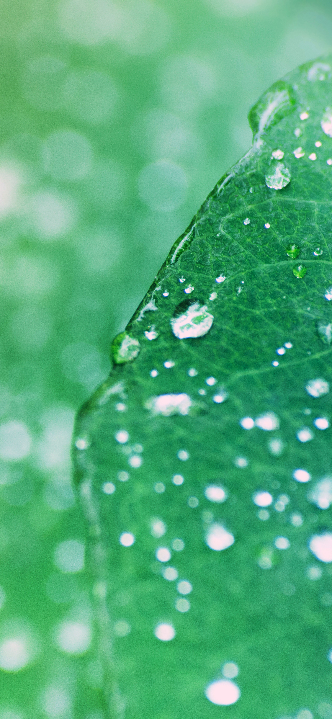 iPhoneXpapers.com-Apple-iPhone-wallpaper-mg97-oasis-leaf-rained-after-morning-nature